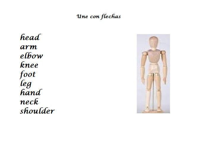 Las partes del cuerpo (Inglés)